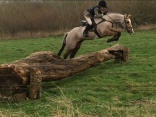 Fantastic Hunting/Racing/Mounted Games Pony