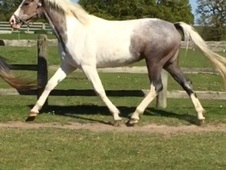 Stunning youngster for sale