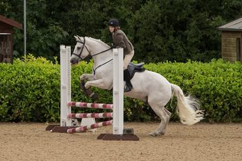 RELUCTANT SALE OF BEAUTIFUL NATURED PONY CLUB PONY & GREAT ALL ROUNDER