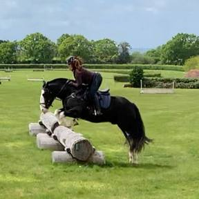 HANDSOME JUMPING /HUNTING COB