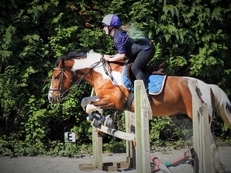 Equine Groom/Rider Available