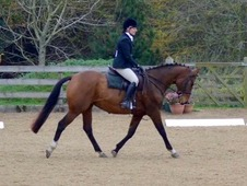 PC/RC/BE 15. 2Hh bay mare, 8 years old