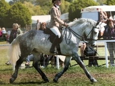 Perfect All Rounder Pony