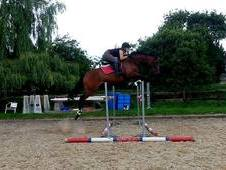Ideal Grassroots Eventer - could easily be produced quickly up th...