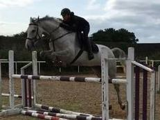 Stunning 17hh 6yr Old Eventer/Showjumper/ Dressage/Top Riding Club