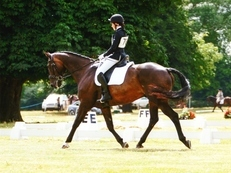 Handsome dressage / schoolmaster/ hack