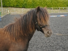 Wanted- lightweight rider for 11hh pony