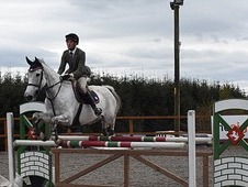 Showjumping 10 year old mare for sale