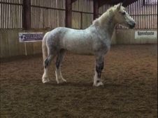 *** STUNNING COB FOR SALE***