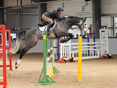 Stunning 7 yo 16.1hh top class event potential