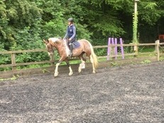 Stunning dressage prospect or happy hacker!