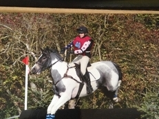 14.1hh Amazing Hunting pony/All rounder