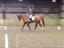 *Bargain* Stunning Mare For Sale
