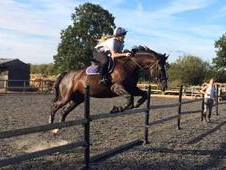 Lovely 16. 2hh Warmblood Gelding for Full Loan