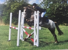 14.1hh 12 year old gelding, eventer/show jumper