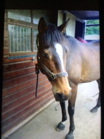 15.1 hh thoroughbred - a real gem!! (2006)