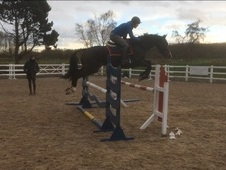 Lovely Jumping Horse