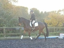 **Video added** Fantastic 16. 2 ID x TB gelding