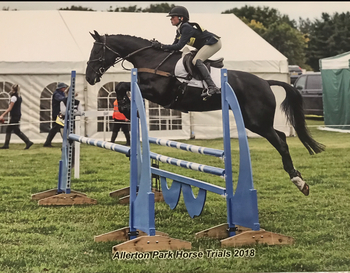 Super Talented 15.3  7year old black gelding
