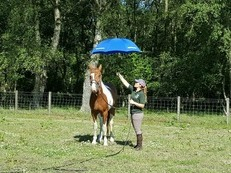 Horse Training/Backing/Schooling/Behavioural issues