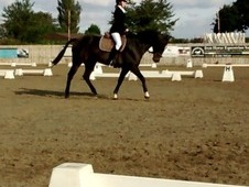 Such a confidence booster 16. 1hh thoroughbred gelding