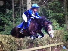 Talented very pretty Welsh section c 13. 2hh