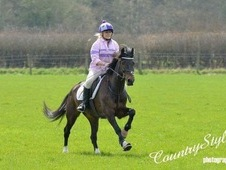 Allrounder, beautiful 14. 2 mare