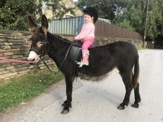 Katelyne 4 Year Old Ride and Drive Mare Donkey