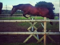 15.1 potential competition horse