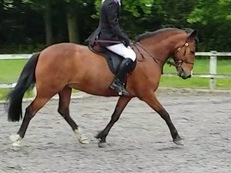 14.2 h Pony for full loan