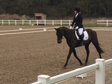 16.1 Hh 10yr old Mare **Reduced For Quick Sale**
