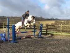 15. 2hh 11yrs Skewbald Gelding by Home Rule