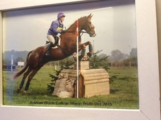 Wonderful easy eventer