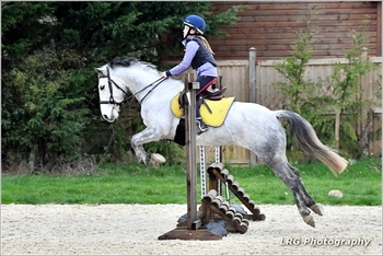 14hh/Connie X/8 years/Mare