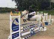 128cm All-Rounder/Jumping/Competition Pony