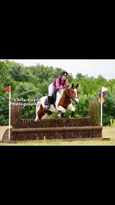 Talented event mare for share/loan