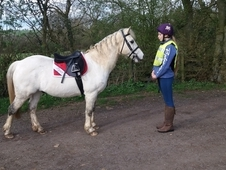13. 1hh all rounder 2nd pony.