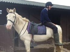 100% safe bomb proof hack 14hh 10 year old cremello gelding for sale