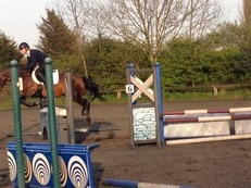 great fun all-rounder pony, sold with all tack