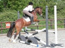 Flashy 13.1hh Welsh X Pony