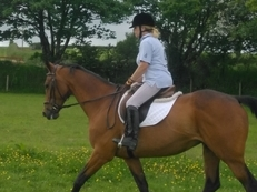 Lovely 16.1hh T/B Bay Mare For Sale (or loan with view to buy)