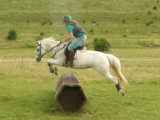 128cm Welsh x mare - Jumping pony