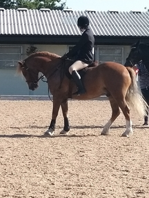 Fab 1 st pony great all rounder