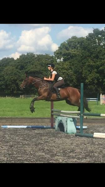 Loan, lwvtb or sale - Prospective eventer/SJ