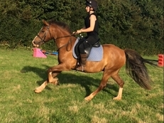Fun and sensible gelding all rounder