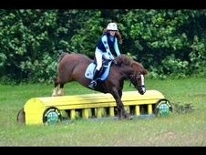 13. 3hh Welsh Section D Mare for sale