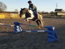 ***Smart Competition Pony***