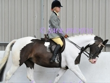 Lovely coloured mare for sale
