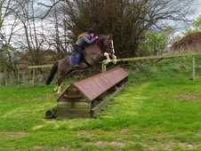 Safe and talented pony club allrounder/BSJA/WHP/competitio n pony