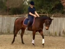 Horse for full or part loan 15'3 TB Mare